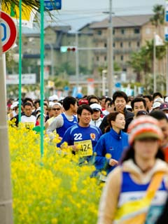 菜の花マラソンの様子